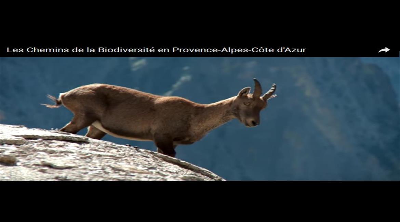 BIODIVERSITÉ : Les chemins de la biodiversité de région PACA