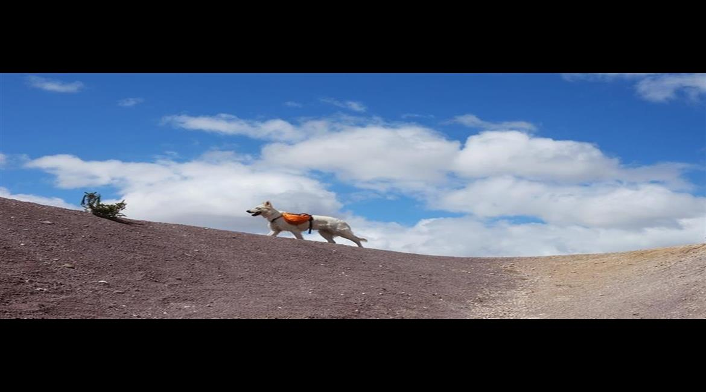 CONSEIL : En randonnée et à la plage avec mon chien